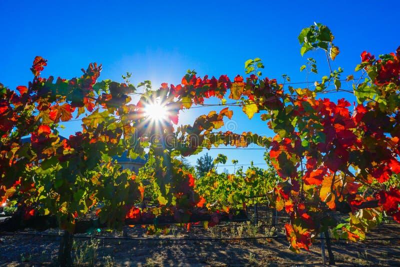 Vignobles de chute dans Temecula CA images stock