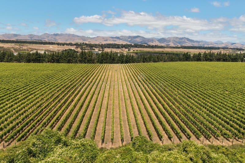 Vignobles de collines de Wither images libres de droits