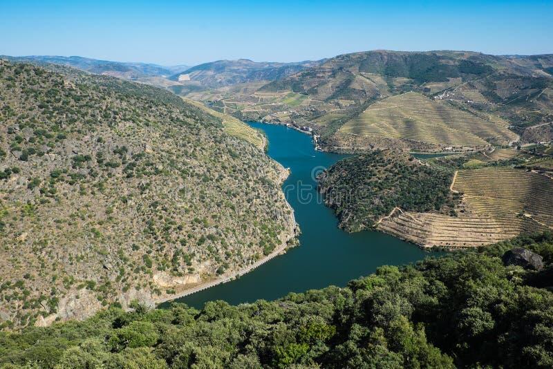 Vignobles de Douro par la rivière image libre de droits