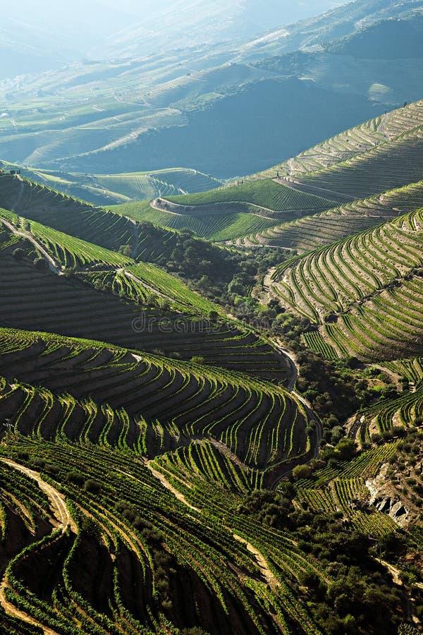 Vignobles de Douro par la rivière photographie stock libre de droits