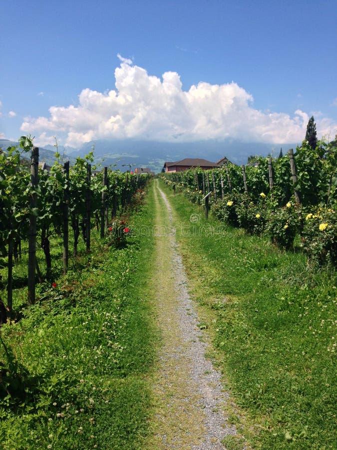 Vignobles de la Liechtenstein photographie stock