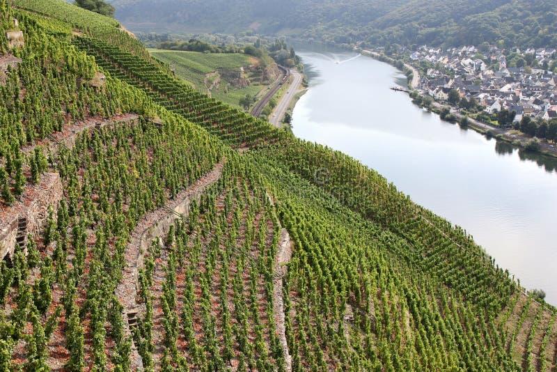 Download Vignobles de la Moselle image stock. Image du saisonnier - 77153249