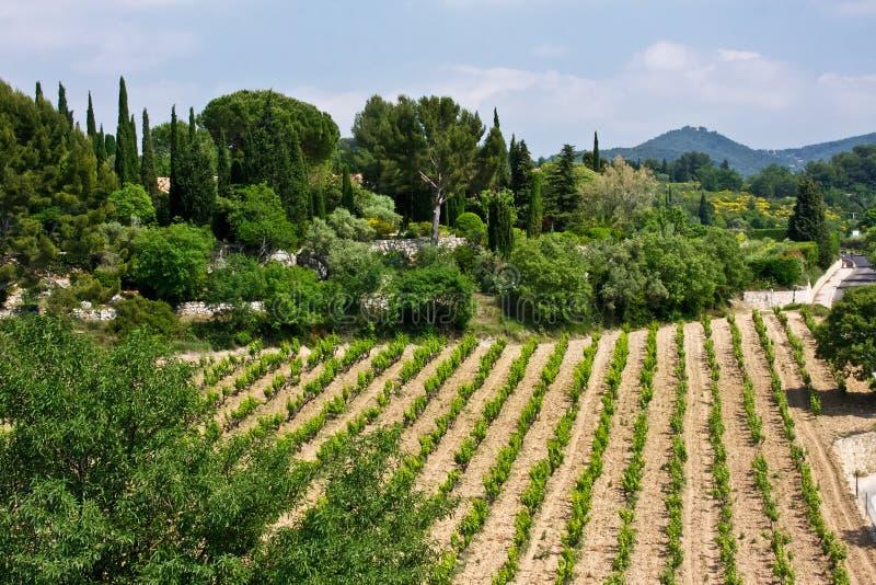 Vignobles de Le Castellet image libre de droits
