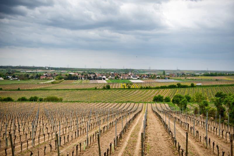 Vignobles de ressort dans Laumersheim, Allemagne photographie stock