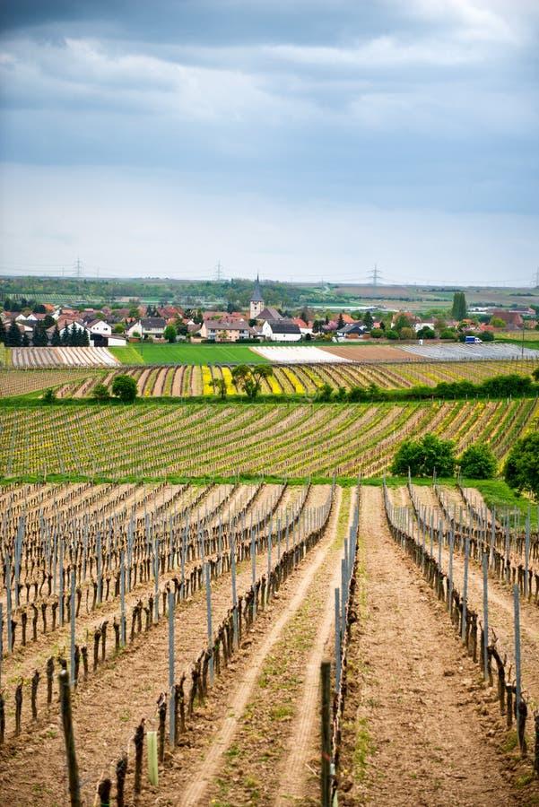 Vignobles de ressort dans Laumersheim, Allemagne images stock