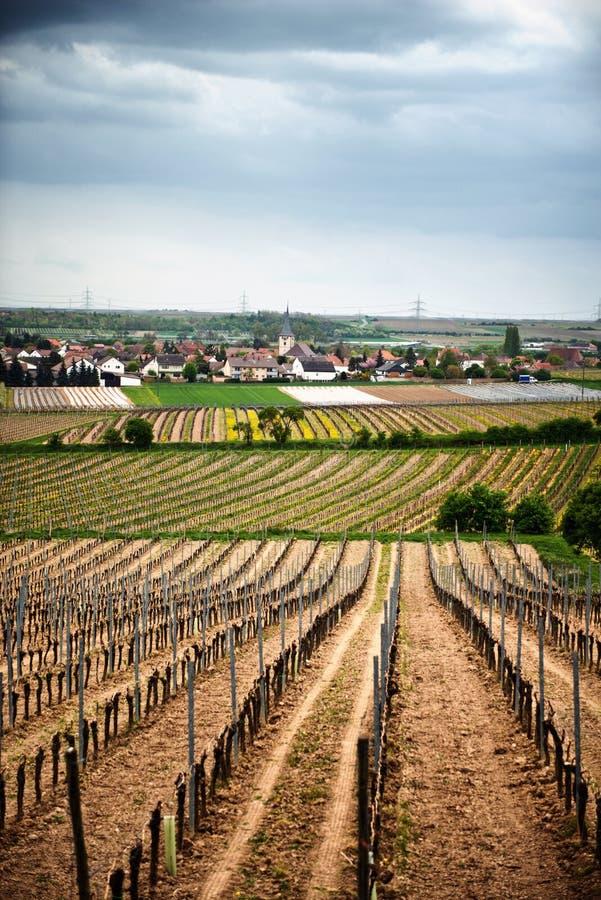 Vignobles de ressort dans Laumersheim, Allemagne image stock