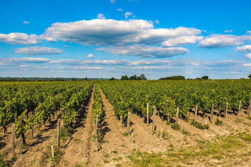 Vignobles de Saint Emilion, Bordeaux, France photo libre de droits