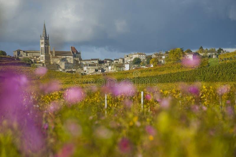 Vignobles de Saint Emilion, Bordeaux, France photos libres de droits