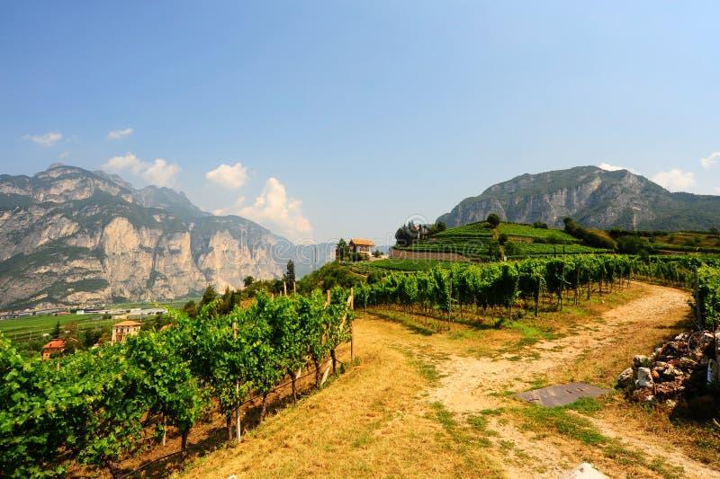 Vignobles des Alpes italiens photo libre de droits