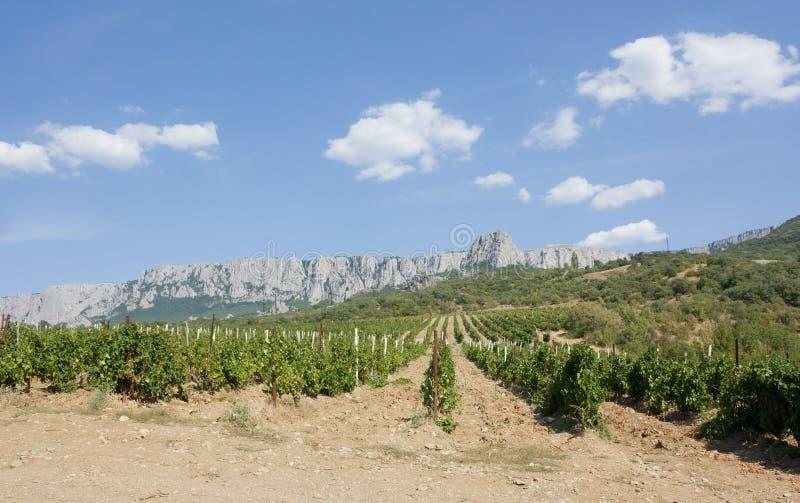 Vignobles en bas de montagne photo stock
