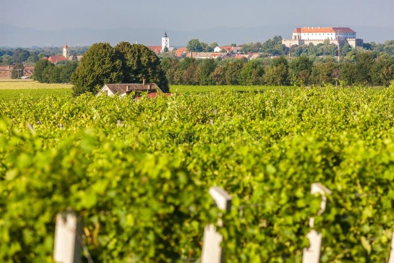 vignobles et ch?teau de Siklos, Hongrie photo libre de droits