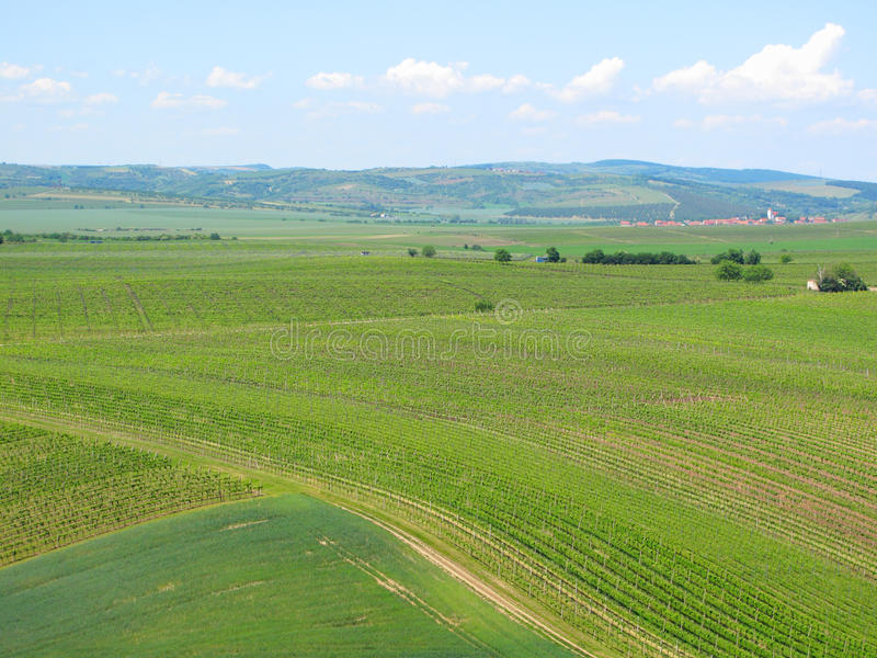 Vignobles et champs en Moravie du sud photos libres de droits