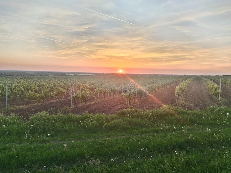 Vignobles et coucher du soleil photo libre de droits