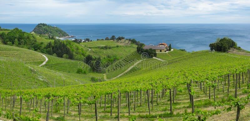 Vignobles et ferme pour la production du vin blanc photographie stock libre de droits
