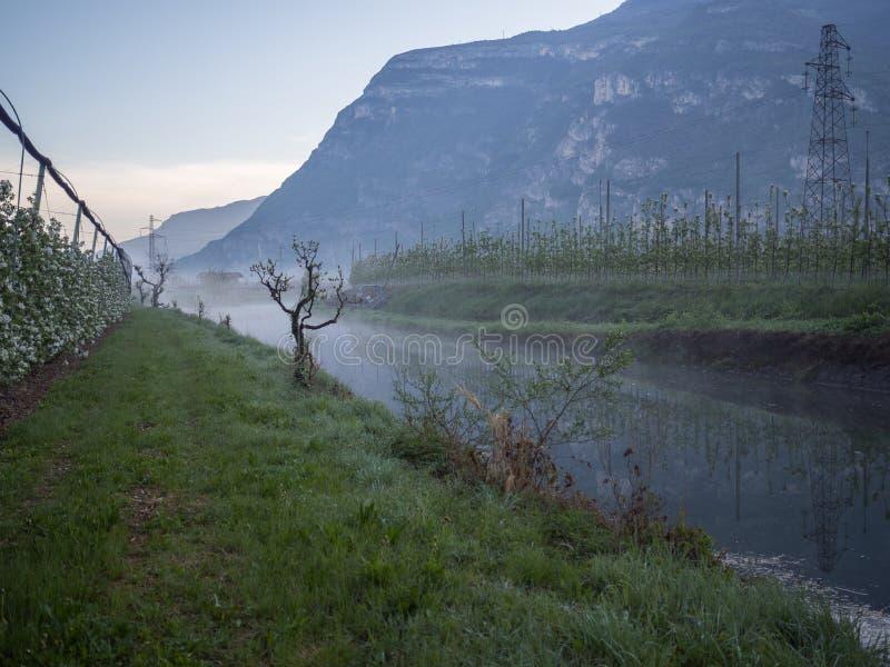 Vignobles et pommiers en vallée Trentino de vallagarina photos stock