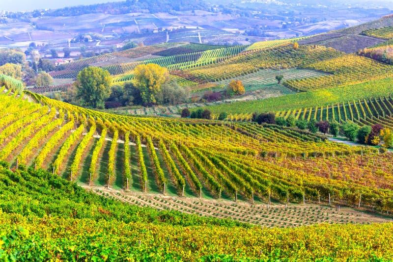 Vignobles impressionnants de la Toscane - région célèbre de vigne de l'Italie image stock