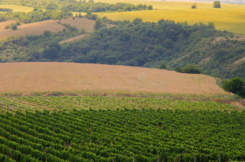Vignobles le long du Danube, Bulgarie images libres de droits