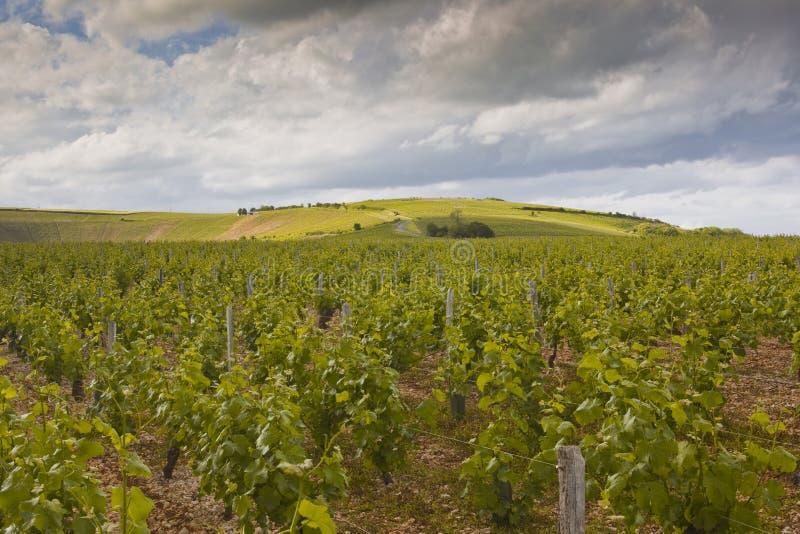 Vignobles orageux de la Loire images stock