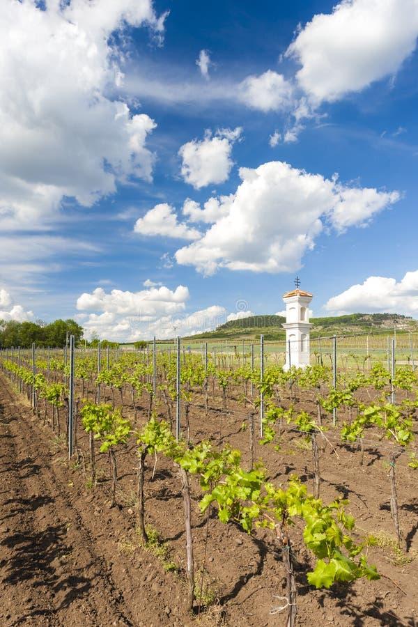 vignobles, Palava, région de la Moravie, République Tchèque images stock