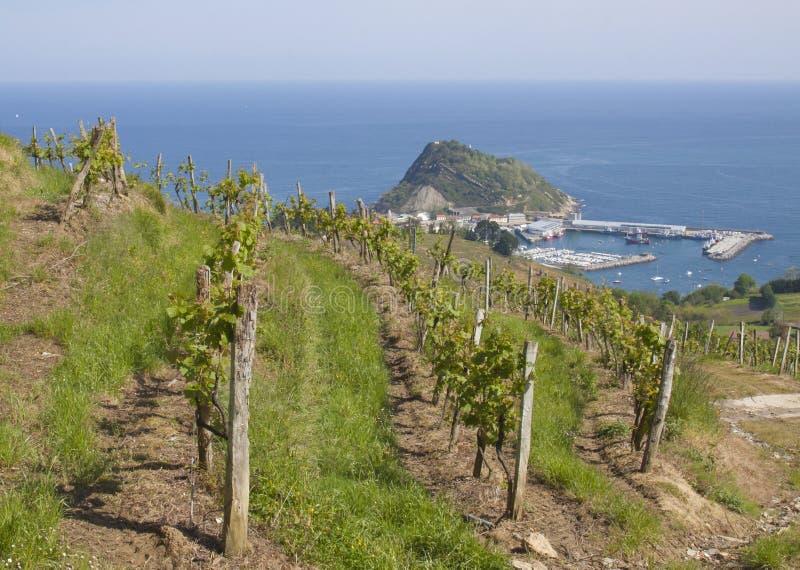 Vignobles pour la production vinicole à Getaria photo stock