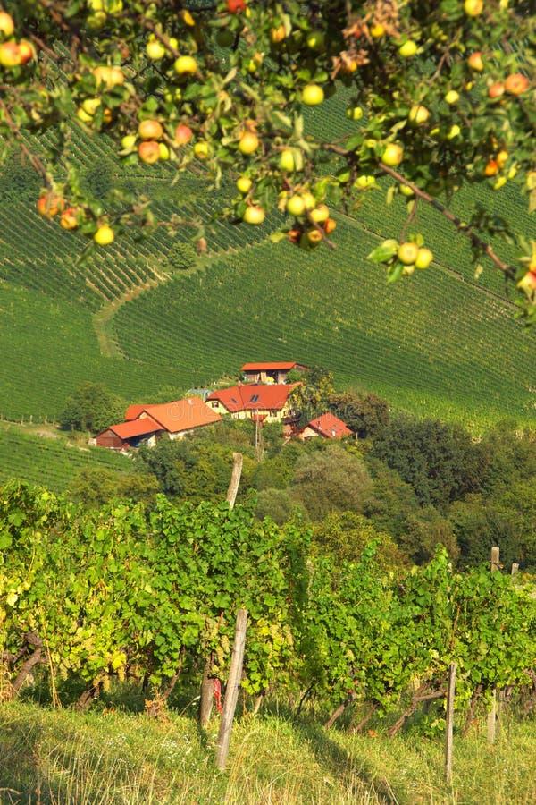 Vignobles près d'ina de  de SveÄ, Slovénie photos stock