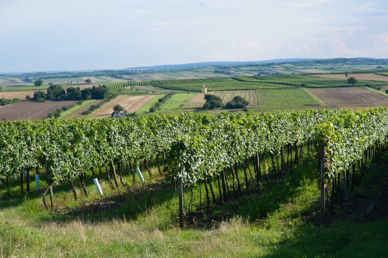 Vignobles près d'Unterretzbach en Basse Autriche images libres de droits
