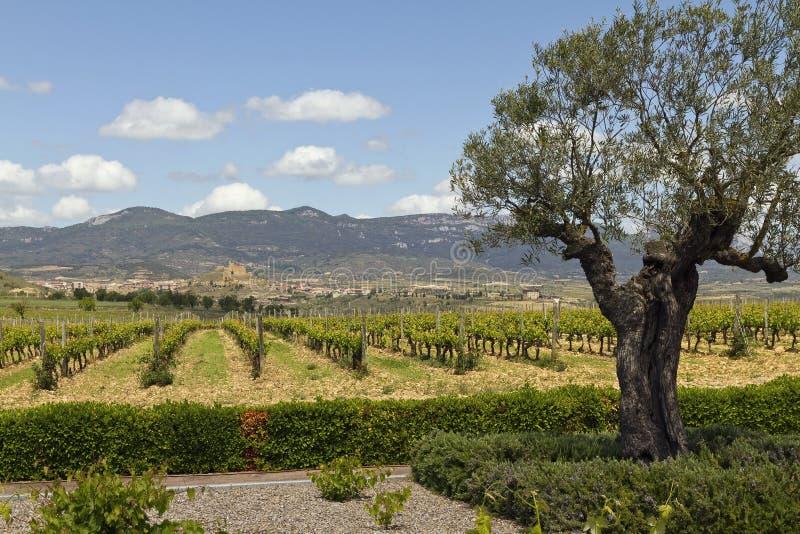 Vignobles près de Briones photo stock