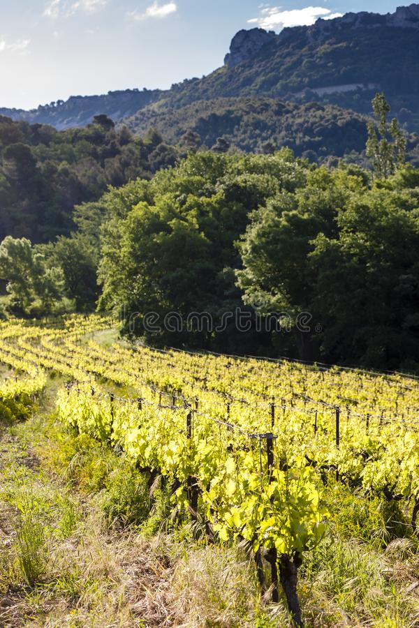 vignobles près de Chateauneuf-du-Pape, France photos libres de droits