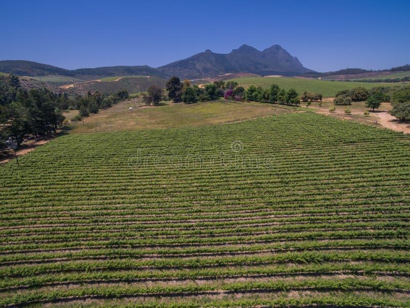 Vignobles sud-africains photos stock