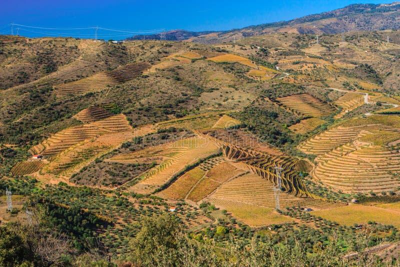 Vignobles sur la rivière de Douro photos stock