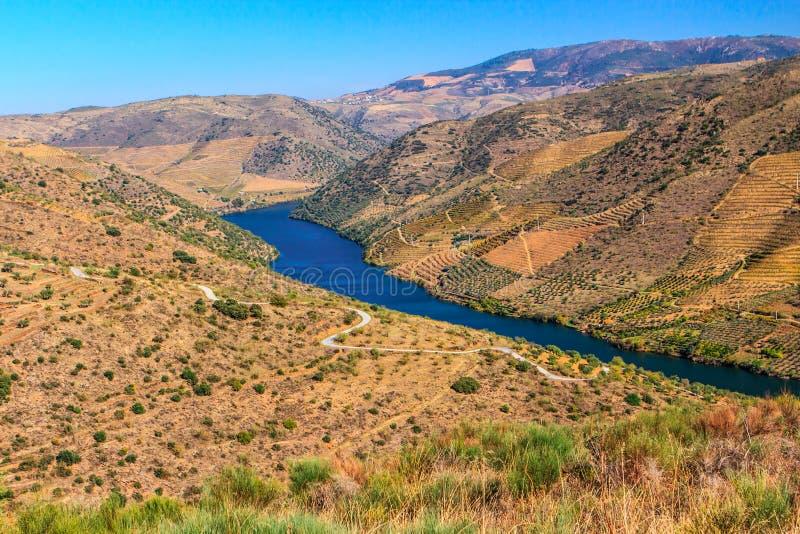 Vignobles sur la rivière de Douro photographie stock libre de droits