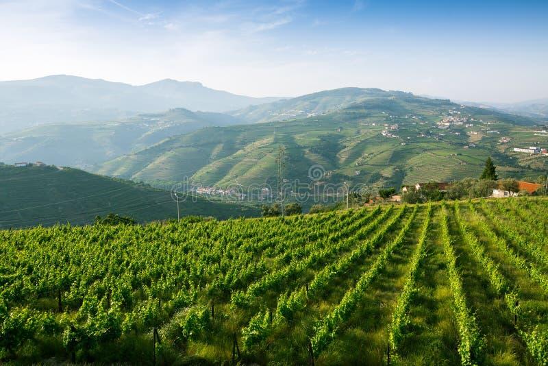 Vignobles sur les collines vertes Vallée de Douro photographie stock