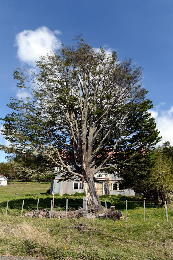 Vigogna d'annata della proprietà in Tierra del Fuego fotografia stock libera da diritti