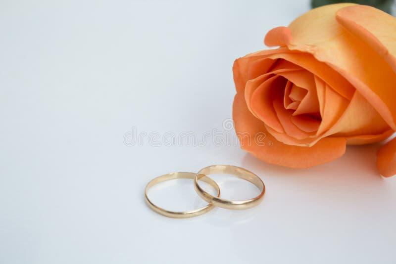 Vigselringar med den orange rosen, på vit bakgrund royaltyfri foto