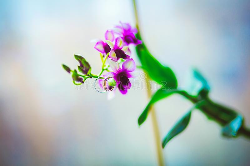 Vigselringar på den purpurfärgade orkidéblomman arkivbild