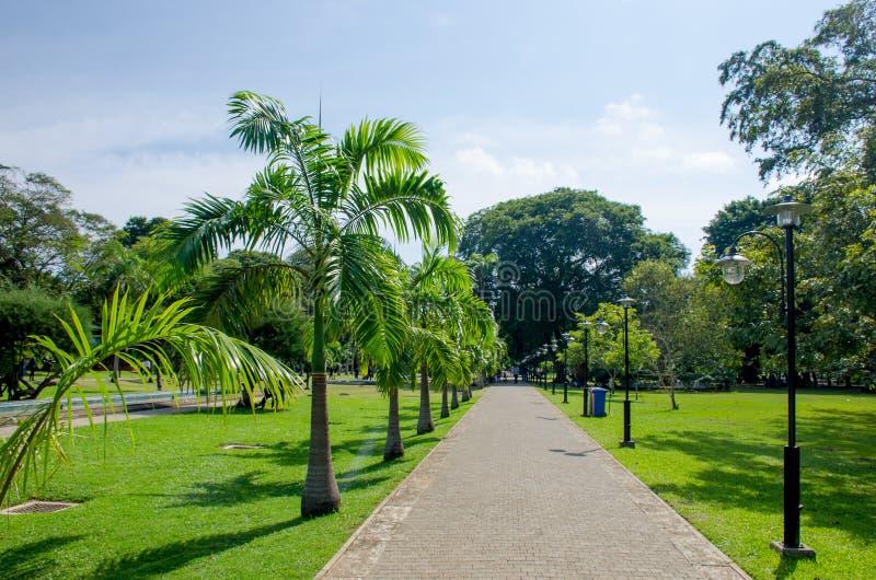 Viharamahadevi парк к городу Коломбо Шри-Ланка стоковые изображения rf