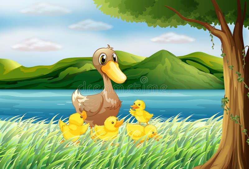 Vijf eenden bij riverbank vector illustratie