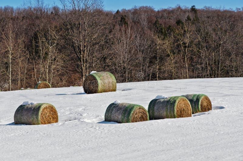 Vijf Groot Gerold Hay Bales op Sneeuwgebied stock afbeelding