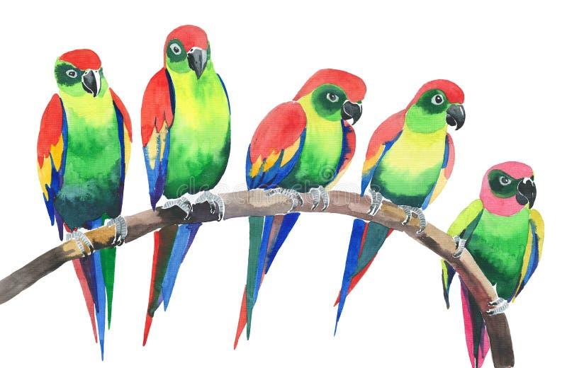 Vijf heldere kleurrijke leuke mooie wildernis tropische gele en groene papegaaien op een takwaterverf overhandigen illustratie vector illustratie