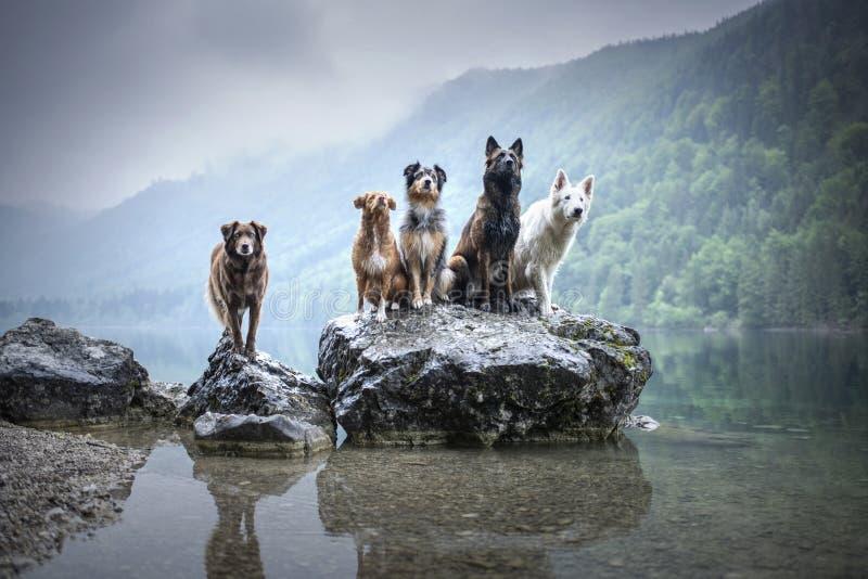 Vijf honden zitten op een rots in mooi landschap Vriendschap tussen honden Braaf honden van verschillende rassen royalty-vrije stock fotografie