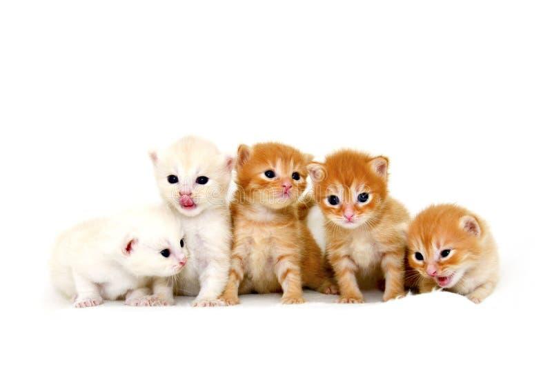 Vijf katjes die in een rij zitten royalty-vrije stock afbeelding