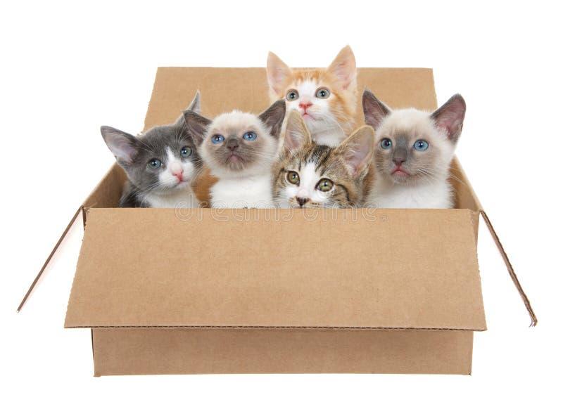 Vijf katjes in een bruine doos royalty-vrije stock foto
