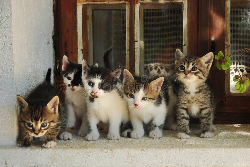 Vijf kleine katten stock fotografie