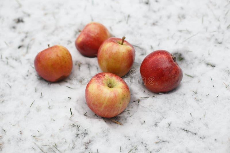 Vijf rode appelen in de sneeuw stock afbeeldingen