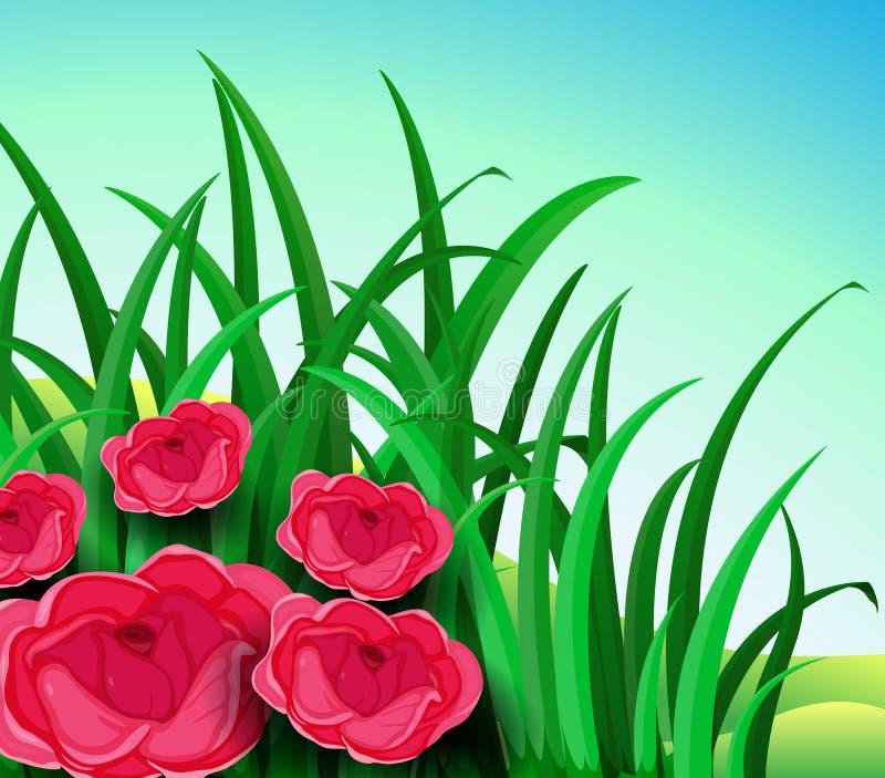 Vijf rode rozen in de tuin vector illustratie