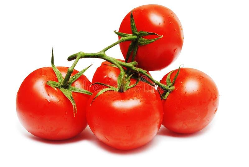 Vijf rode tomaten die op wit worden geïsoleerds royalty-vrije stock afbeeldingen