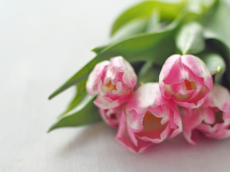 Vijf roze die tulpen op witte houten lijst worden geschikt Bloemachtergrond, onduidelijk beeld Selectieve nadruk op de voorzijde stock foto's