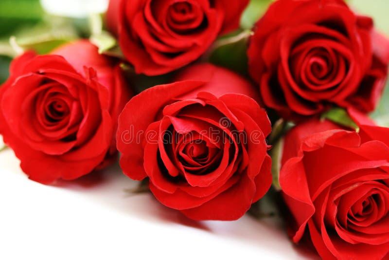 Vijf rozen stock foto