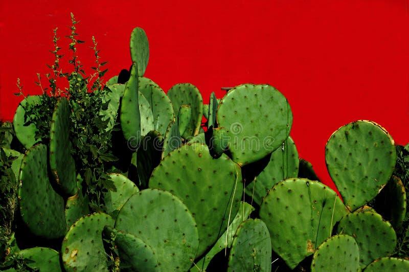 Vijgcactus stock afbeelding