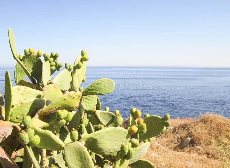 Vijgcactus op Middellandse Zee royalty-vrije stock fotografie